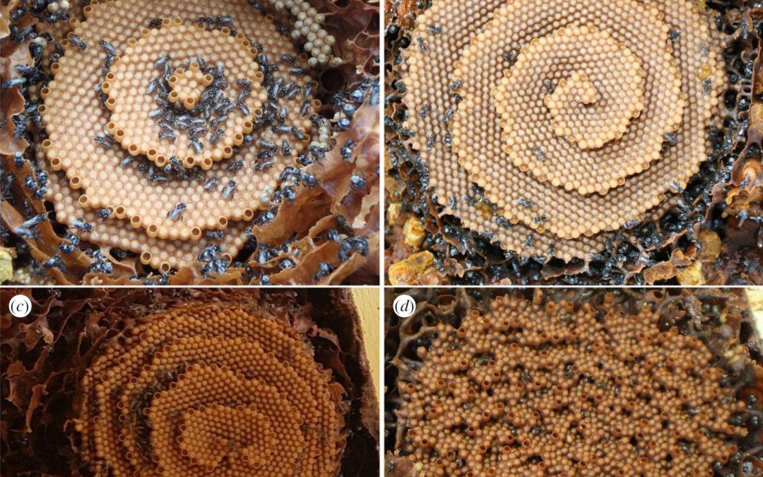 Un equipo en el que participa el IACT desvela qué patrones matemáticos siguen las abejas para fabricar sus perfectos panales
