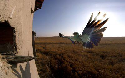 Un estudio revela que la carga de parásitos en colonias mixtas de aves depende de la identidad de sus especies