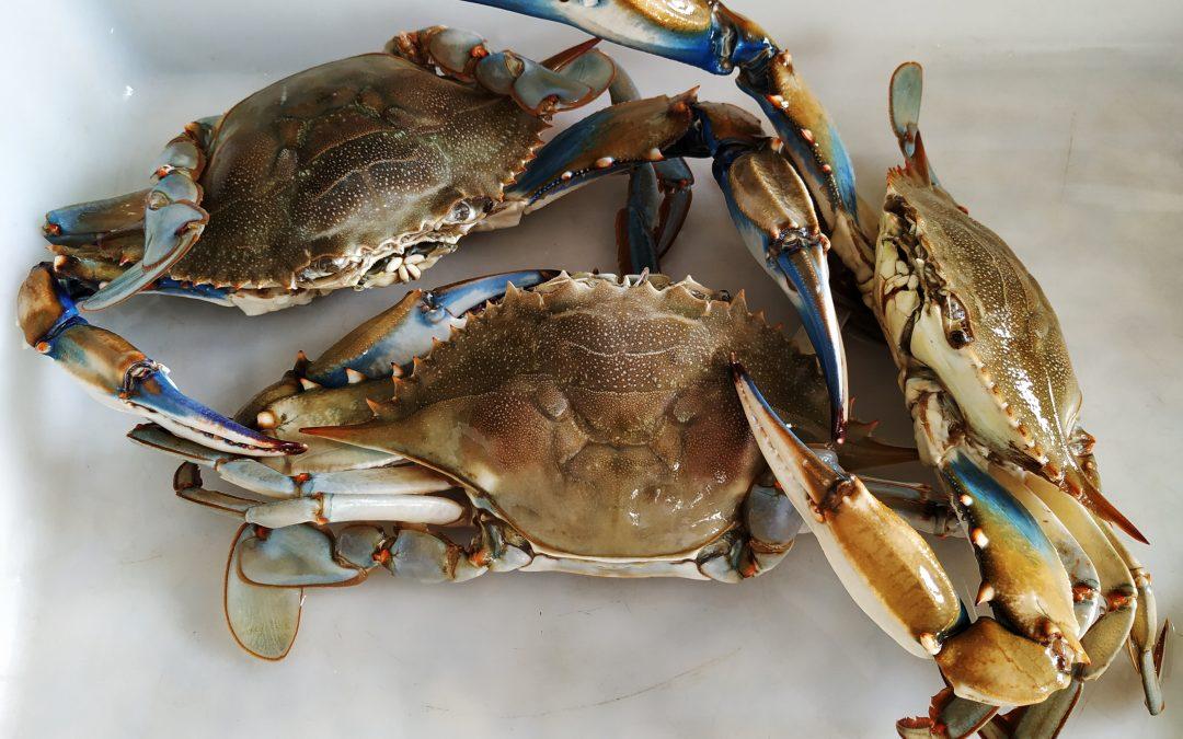 Científicos del ICMAN alertan del aumento de la llegada de crustáceos decápodos exóticos al Golfo de Cádiz