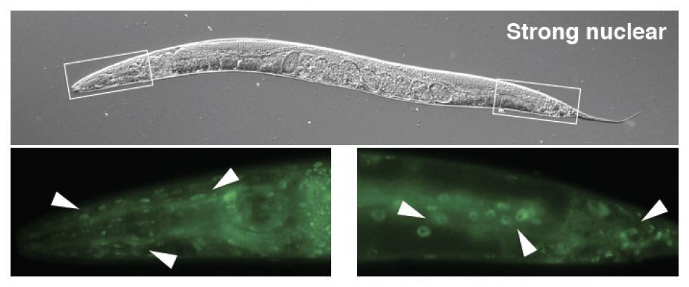 Investigadores del IBiS describen un nuevo mecanismo de regulación para eliminar estructuras celulares dañadas