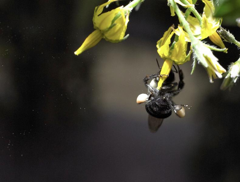 Un estudio de la EBD-CSIC y la UCA demuestra que la forma en la que interaccionan las especies determina la manera en la que coexisten