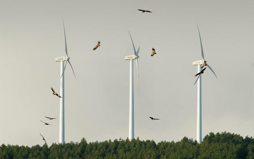 Expertos del CSIC alertan de que la expansión de las energías solar y eólica pueden producir daños irreversibles sobre la biodiversidad