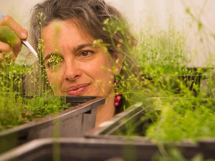 """Bulo 2: """"Los cultivos transgénicos eliminan la biodiversidad"""""""